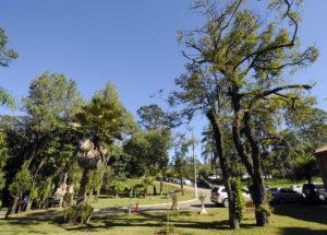Estudo vai mostrar características das árvores em áreas públicas (foto: Paulo Grégio)