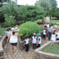 Crianças observam árvore